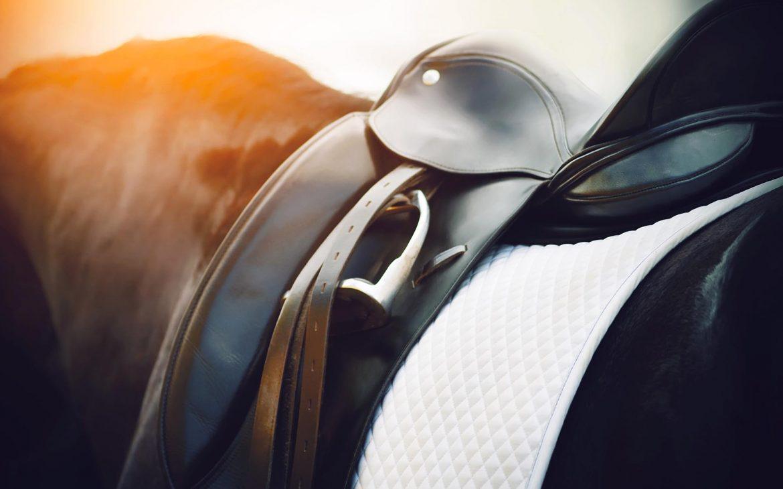 back on the saddle —