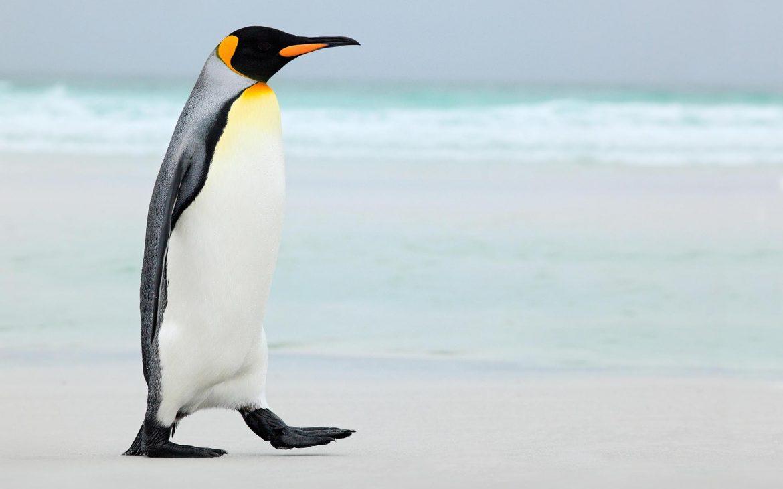 i ❤️ penguins
